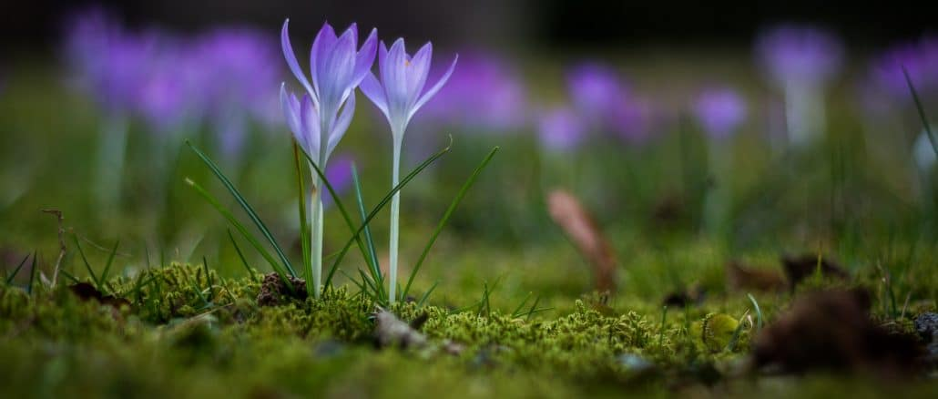 Frühling in Leipzig